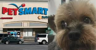 dogs d after grooming at petsmart