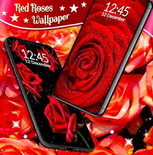 red rose live wallpaper apk 4 17 0