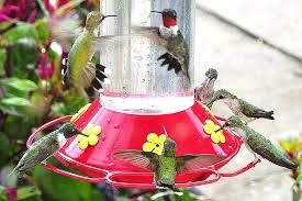 4 easy steps to making hummingbird nectar