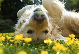 Image result for dogs in spring pictures