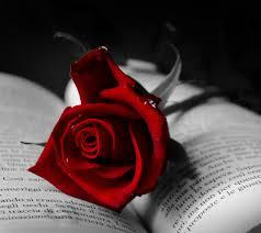 صور دموع الورد مشاعر ودموع نراها في الورد حنان خجولة