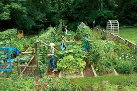 growing your own veggie patch