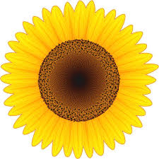 Stickertalk Sunflower Vinyl Sticker 4 Inches X 4 Inches Stickertalk