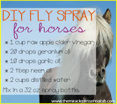 homemade essential oil fly spray for
