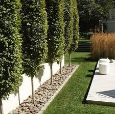 Hornbeam Trees For Fence Line Sequin Gardens Modern Garden Landscaping Garden Landscape Design Privacy Landscaping