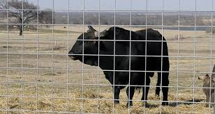 Cattle Panel Mounted Around Feedlots To Keep Livestock In A Fixed Place