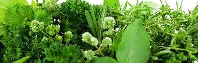 growing herbs consumer nz