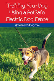 Training Your Dog Using A Petsafe Electric Dog Fence Alpha Trained Dog In 2020 Training Your Dog Dog Fence Your Dog