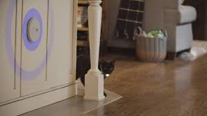Training Your Pet With Invisible Fence Indoor Shields Youtube