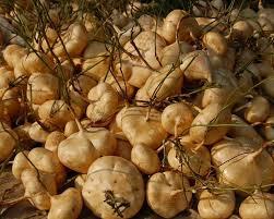 jicama health benefits nutritional