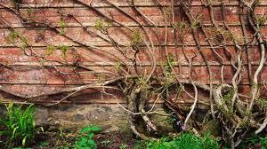 regulations for height of garden wall