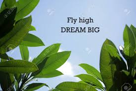 inspirational motivational quote fly high dream big notes