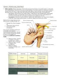 psicobiología ii temas 4 7 docsity