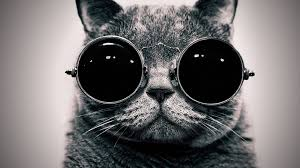 hipster cat sungles desktop wallpaper