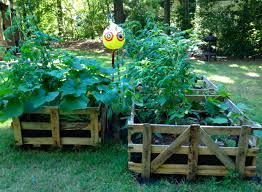 pallet raised garden ideas photograph