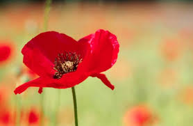 remembrance sunday in the united kingdom