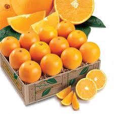 florida s navel oranges citrus