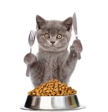 healthy homemade cat food