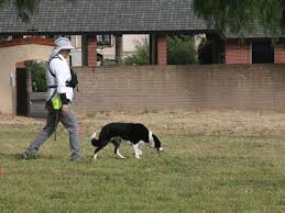 Forensic canines search for burial sites at Old Mission Santa Inés | Local  News | santamariatimes.com