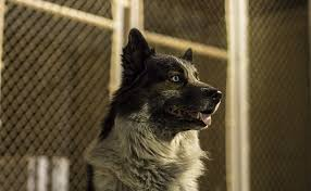 Chain Link Fencing For Dogs And Other Pets