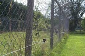 Temporary Permanent Chicken Electric Fencing Electric Fencing Direct