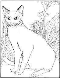 Kleurplaten En Zo Kleurplaten Van Poezen En Katten