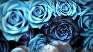 صور حلوه صور حلوه الورد واثاره علي البنات صباح الورد