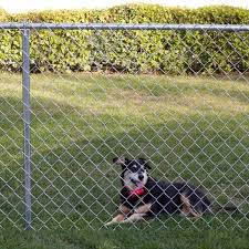 5 Ft Chain Link Fence Fence Ideas