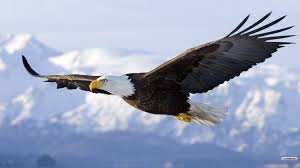 Eagle Flying HD Wallpapers - Top Free Eagle Flying HD Backgrounds ...