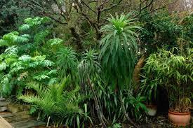 tropical garden plants make all the