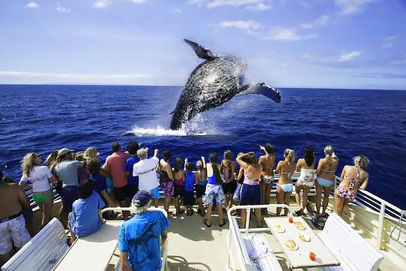 """Best Places for Whale Watching"""""""