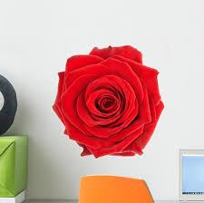 Beautiful Single Red Rose Wall Decal Wallmonkeys Com