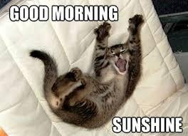 Good Morning Cat Meme