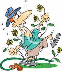 Cartoon Gardener Attacked By Weeds - Royalty Free Clipart Picture