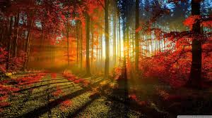 indian summer wallpapers top free