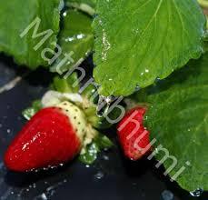 organic pesticides for your garden