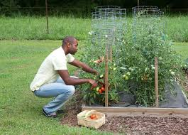 build a raised bed garden bonnie plants
