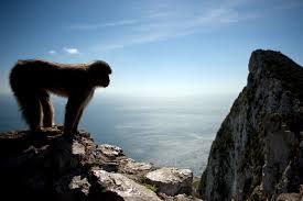 Gibraltar - The Local Spain