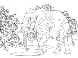 Afrikaanse Bos Olifant Loopt Kleurplaat Gratis Kleurplaten Printen