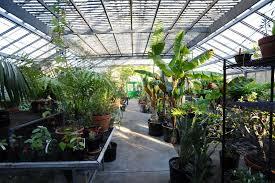 bartlett arboretum plant this