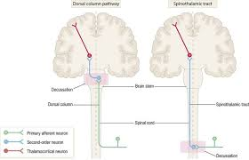 sensory and motor pathways clinical gate