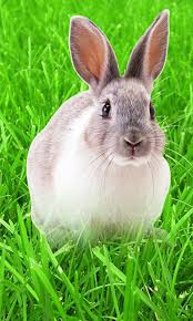 rabbit wallpapers full hd 31759 baltana