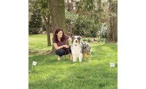 Petsafe Free To Roam Wireless Fence Portable Wireless Pet Fence At Crutchfield