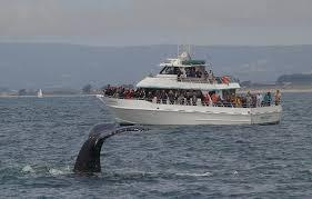 santa cruz whale watching santa cruz