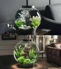 fish aquarium aquarium fish bowl