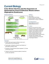 pdf false blister beetles and the