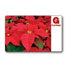 poinsettia gift card