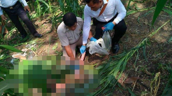 Jadi Korban Pembunuhan, Janda Muda Ditemukan Tewas Tanpa Busana di Kebun Jagung
