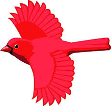 Amazon Com Beautiful Regal Red Cardinal Bird Cartoon Art Vinyl Sticker 12 Wide Flying Automotive