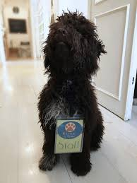 Giornata Mondiale del cane in ufficio - Abbaiare in Italia